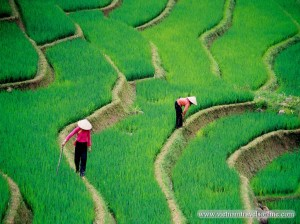 vietnam sapa bac ha 31 (1024x768)